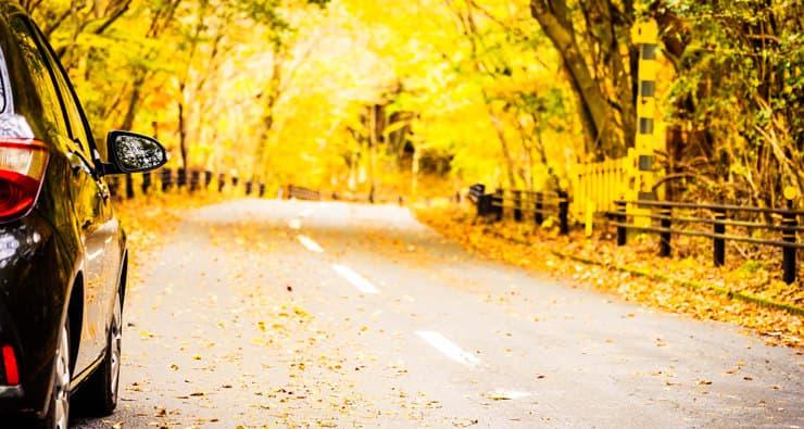 Coche en carretera llena de hojas otoñales