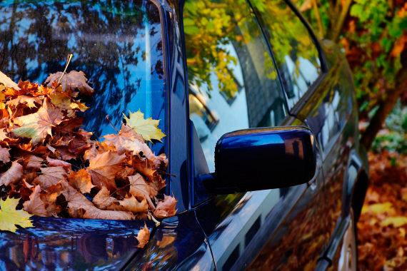 Coche en otoño con hojas sobre el parabrisas.